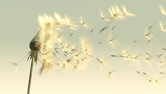 Creating-and-animating-a-dandelion-in-Autodesk-Maya-and-ZBrush