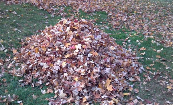 pile-of-leafs