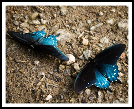 Image result for butterflies on poop
